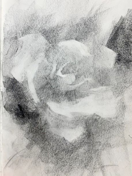 Elisabeth Larson Koehler, Drawing of a Rose, value and shading simplified