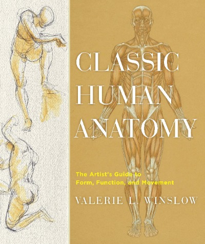 ecorche and anatomy for artists