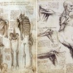 What is Écorché Drawing - and The Importance of Anatomy for Artists