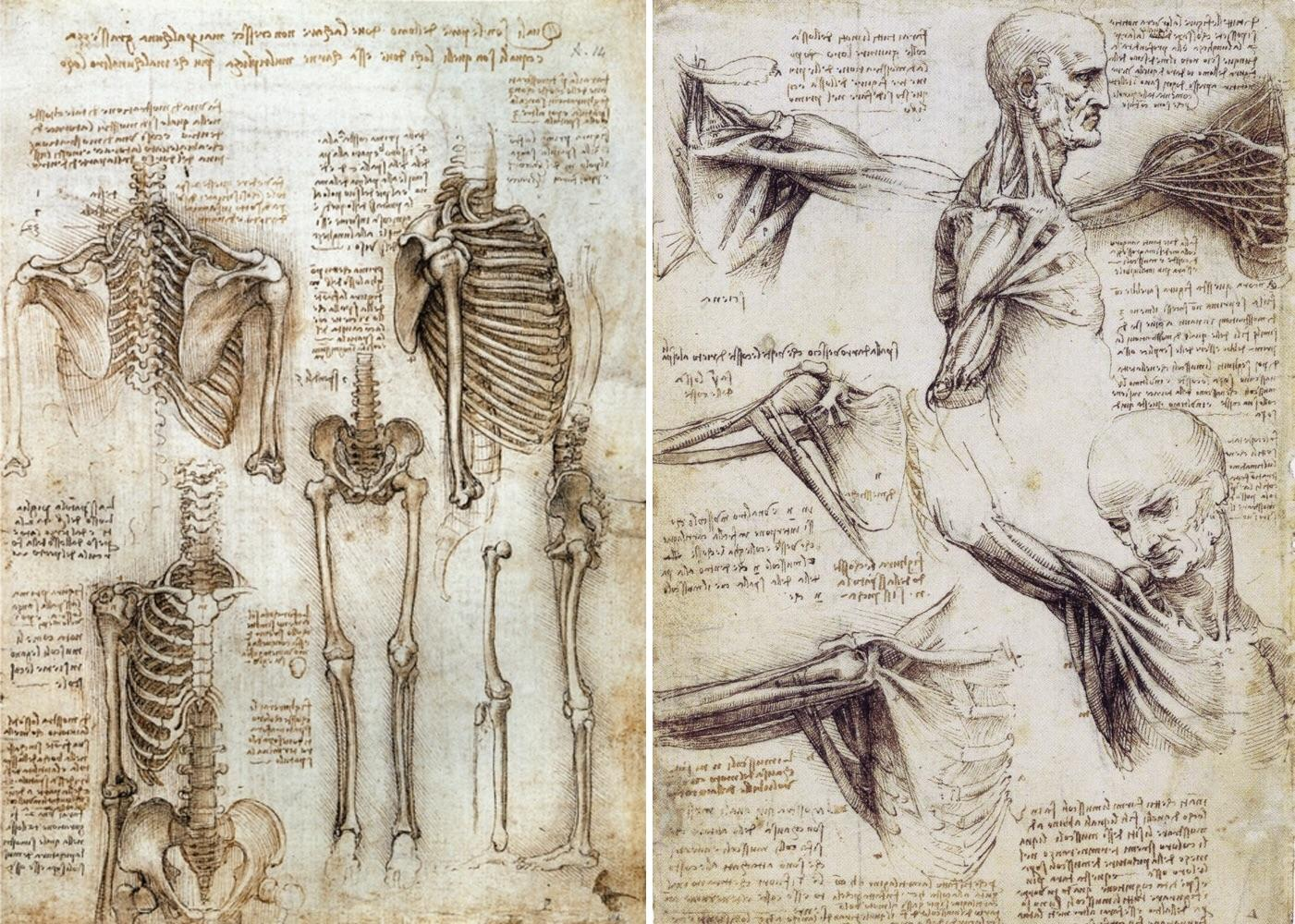 leonardo da vinci anatomy for artists